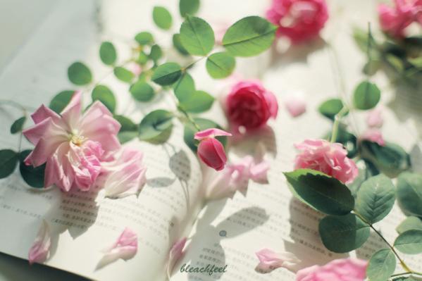 超级美的爱情句子20则