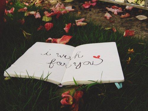 植物大战僵尸的情话 就算只有一刹那,我也觉得,自己很美丽