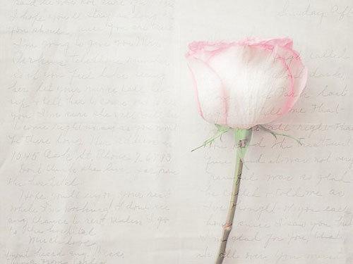 关于玫瑰爱情的句子